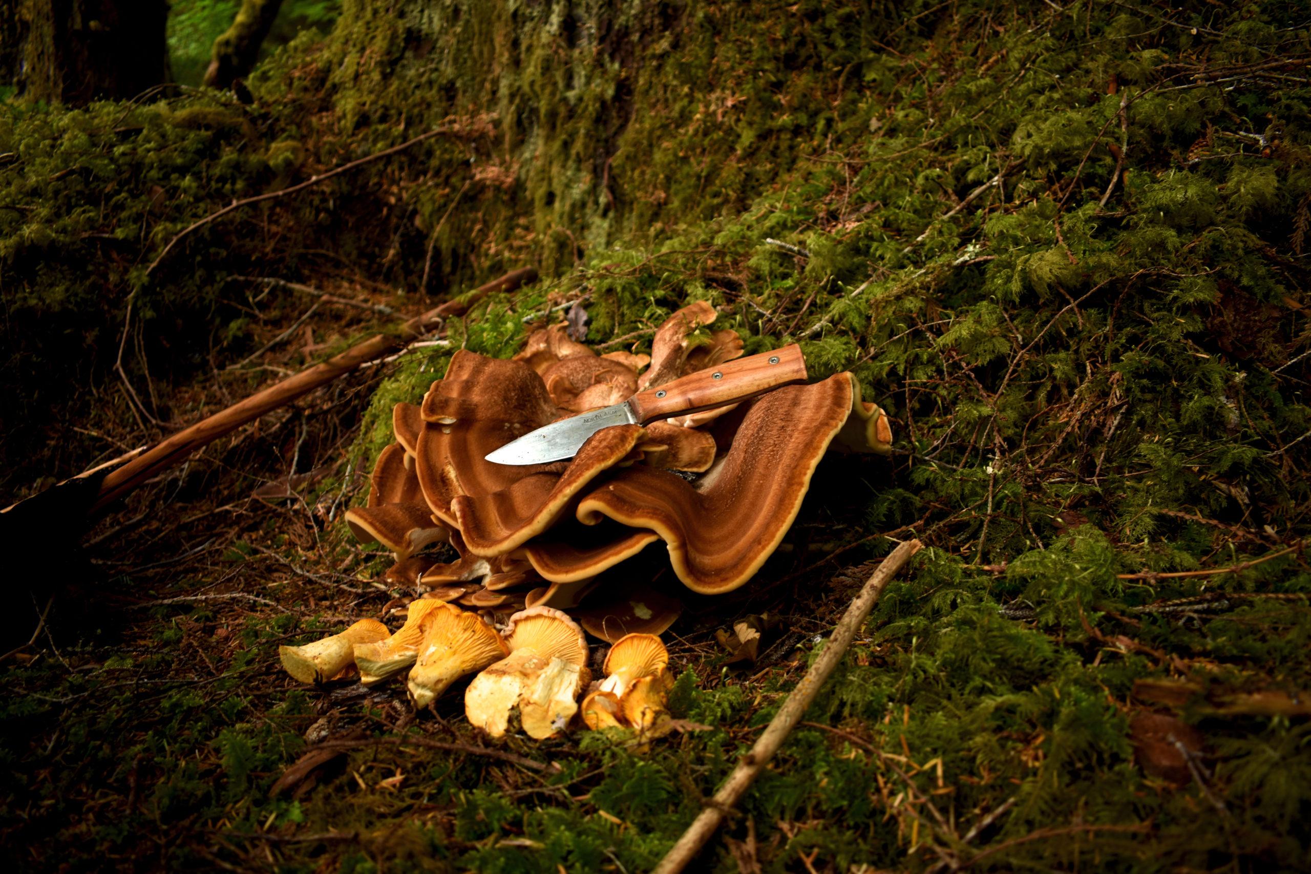 Mushroom_hunting_knife
